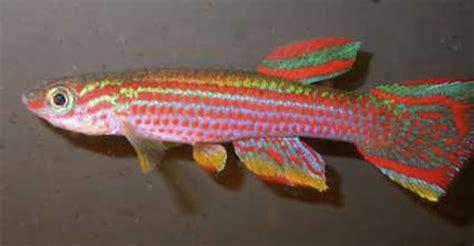 les biotopes des killies eau douce afrique de l ouest aquarium webzine l aquariophilie d