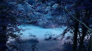 magical pond in a forest at night - Lakes & Nature ...