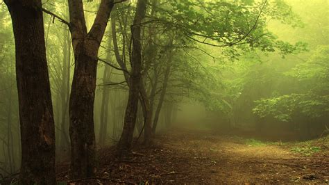 mist, Forest, Trees Wallpapers HD / Desktop and Mobile ...