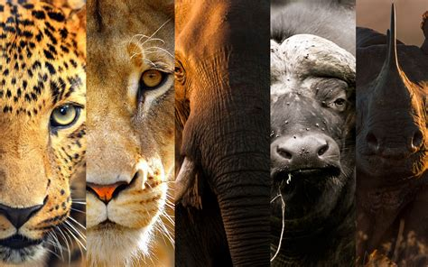 The African Wildlife Ambassadors