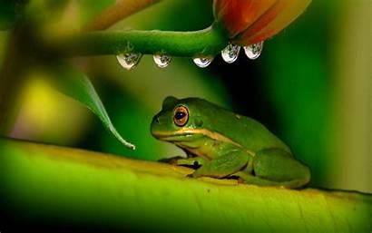 Frog Wallpapers Leave Animals Frogs Desktop Normal