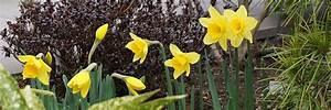 Garten Im März : der garten im m rz das fr hjahr beginnt tipps tricks ~ Lizthompson.info Haus und Dekorationen