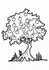 Coloring Tree Pages Apple Printable sketch template