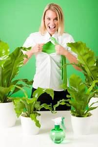 Große Zimmerpflanzen Wenig Licht : zimmerpflanzen h ufigste krankheiten ~ Markanthonyermac.com Haus und Dekorationen