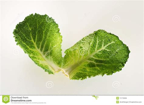 Savoy Cabbage Leaves Royalty Free Stock Images Image