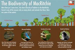Why Love MacRitchie Love Our MacRitchie Forest