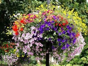 petunia flowers ogród na balkonie jakie rośliny do doniczek artykuły