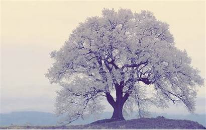Tree Pretty Spring Wallpapers