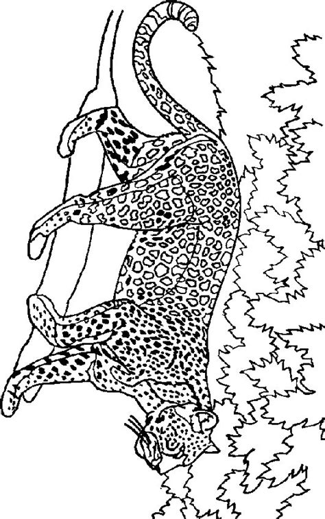 Kleurplaat Leeuw En Tijger by N 19 Kleurplaten Leeuwen