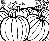 Pumpkin Coloring Pumpkins Thanksgiving Patch Printable Sheet Adults Fall Celebrate Template Mouse Clipartmag Popular sketch template
