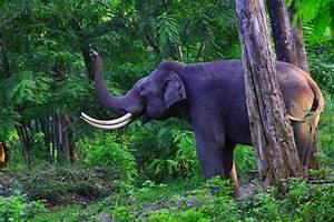 Explore the fabulous Periyar National Park, Kerala