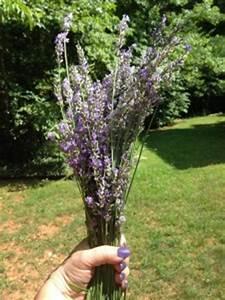 Lavendel Schneiden Im Herbst : lavendel schneiden was gibt es zu beachten garten mix ~ Lizthompson.info Haus und Dekorationen