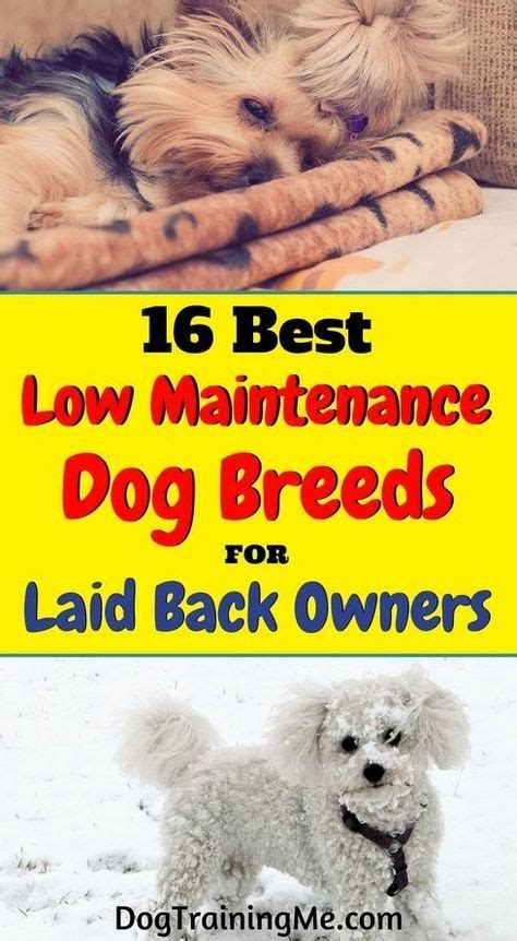 best for owners 16 best low maintenance breeds for laid back owners