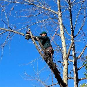 Tuer Un Arbre Avec De L Acide : comment laguer un arbre ~ Dailycaller-alerts.com Idées de Décoration