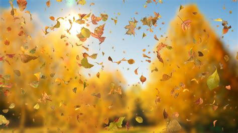Fall Backgrounds Realistic by Tag Sky Downloops Creative Motion Backgrounds