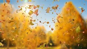 Autumn, Fall, Leaves, Sideways