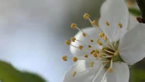 fiori do bach centro discipline olistiche olos fiori di bach
