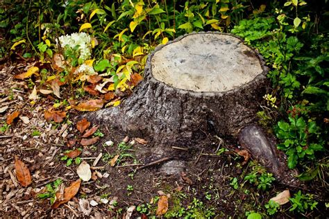Stump Removal Without Grinders