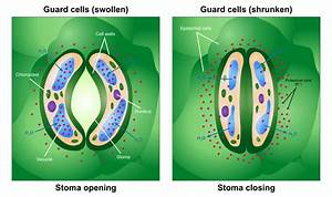 File Opening And Closing Of Stoma Svg