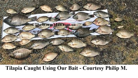 Worms For Worm Farms & Fishing Bait
