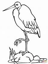 Coloring Stork Pages Leg Standing Vogel Drawing Printable sketch template