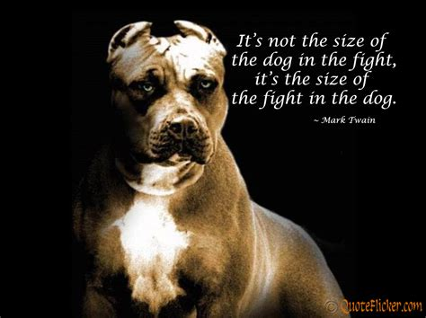 And Saying Fighting Dog Cute Quotes