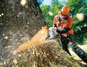 Welche Bäume Darf Man Nicht Fällen : wann darf man eigene b ume f llen garten news f r heimwerker ~ A.2002-acura-tl-radio.info Haus und Dekorationen