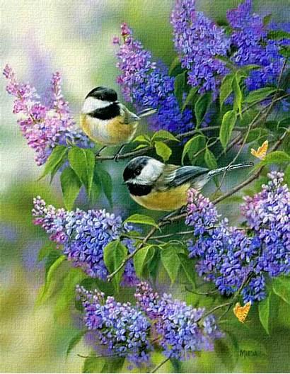 Birds Spring Lilacs Lovethispic Flowers Bird Lilac