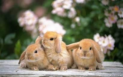 Rabbit Wallpapers Desktop Funny