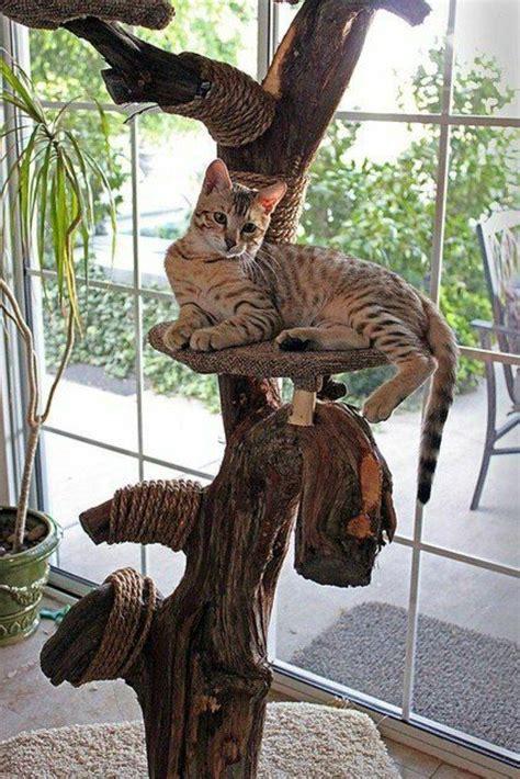 naturkratzbaum selber bauen kratzbaum selber bauen 67 ideen und bauanleitungen archzine net wohnen