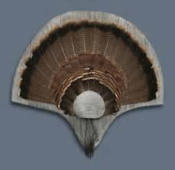 Wild Turkey Tail Feather Mount