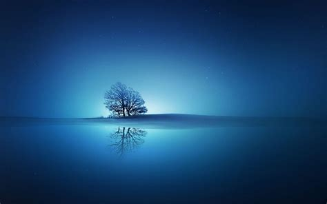 hd tree   blue sunset wallpaper