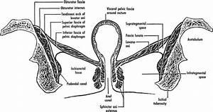 Ischiorectal Fossa Abscess After Pelvic Floor Injection Of