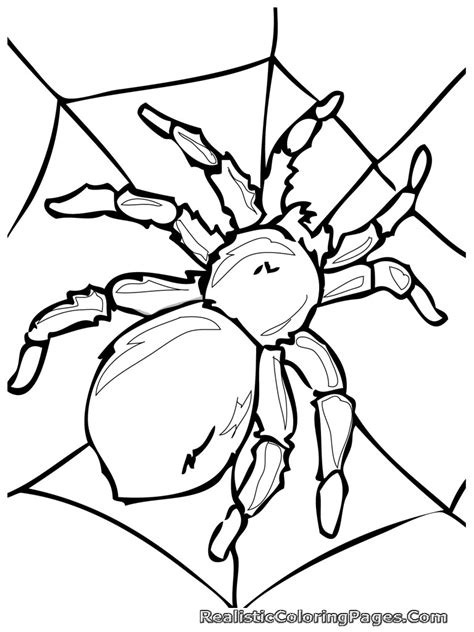 Coloring Insects by Realistic Insect Coloring Pages Realistic Coloring Pages