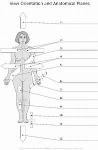 17 Best Images Of Worksheets Human Anatomy