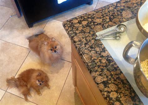Pomeranian Dog Treat Recipe