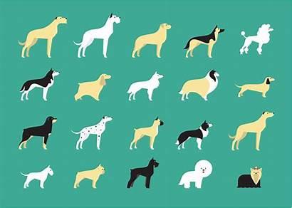 Dog Wolfhound Irish Icons Vector Breeds Screensavers