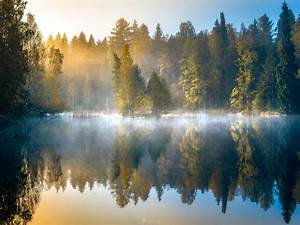 Morning forest, fog, lake, trees, autumn, Finland ...