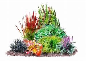 Weidenruten Zum Pflanzen Kaufen : pflanzenset japan staudenbeet 7 pflanzen kaufen otto ~ Lizthompson.info Haus und Dekorationen