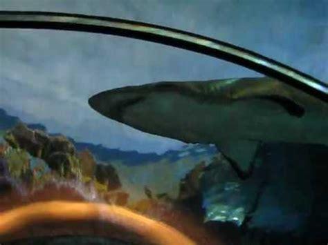 Shark Tank Sea World San Diego Youtube