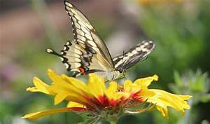 17 best images about butterfly exhibits on pinterest for Phoenix butterfly garden