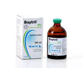 baytril for cats baytril