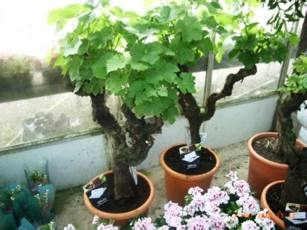 au jardin 187 vignes centenaires gare 224 l arnaque