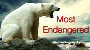 Endangered species; Threatened Species