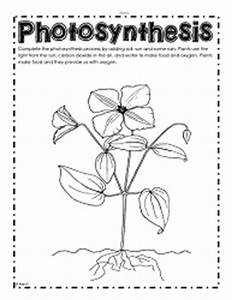 Grows Light Crossword Parts Of A Plant Worksheets