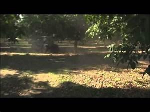 Alten Walnussbaum Schneiden : walnussveredlung 2012 der omegaschnitt doovi ~ Lizthompson.info Haus und Dekorationen