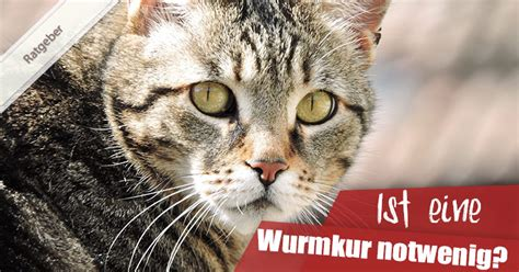 Welche Wurmkur Katze