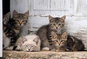 464 best images about barn cats rock on pinterest With barn kittens for sale