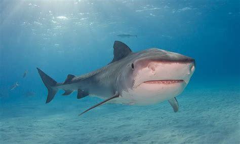 scuba diver  dies  brutal shark attack  mexico