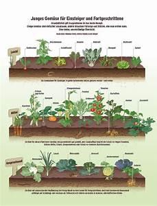 Gemüsegarten Anlegen Beispiele : garten gem se richtig anbauen beobachter garten pflanzen garten und garten hochbeet ~ Watch28wear.com Haus und Dekorationen